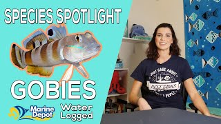 How to Take Care of Gobies: Species Spotlight with Hilary