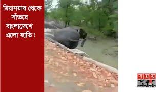 মিয়ানমার থেকে সাঁতরে বাংলাদেশে এলো হাতি  | Elephant Come from Myanmar