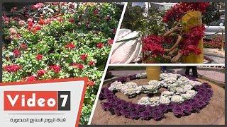 «أدى الربيع عاد من تانى».. شاهد جمال الزهور وتعرف على كيفية العناية بها