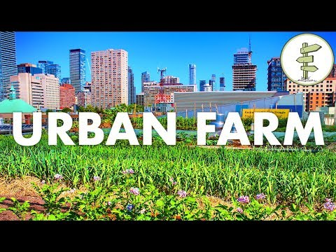 Growing Food in the City - Urban Rooftop Farm in Downtown Toronto