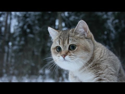 Cute Kitty Cats Compilation - Satisfying Cats Video Ever