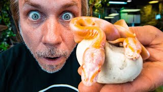 TWIN SNAKES HATCH!! TWO BABY ALBINOS!!! | BRIAN BARCZYK