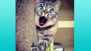 【かわいい猫】絶対笑う、おもしろ猫、思わず吹き出すハプニング集【これってマジ…】