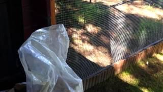 Hühner und Parasiten - Tipps zur Vorbeuge