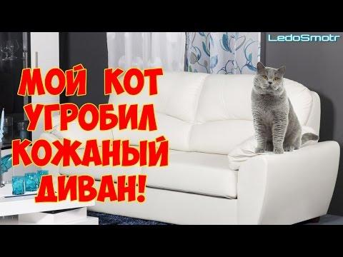 Возврат обоев Главный форум потребителей России