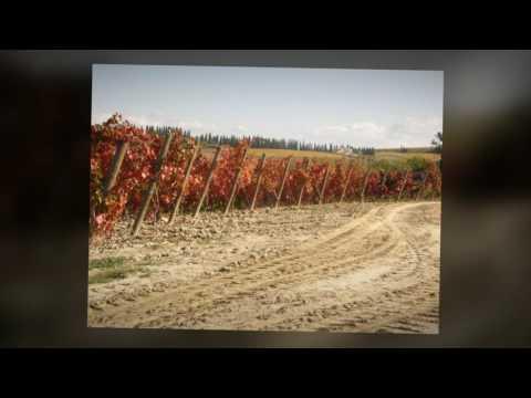 Canzone del Vino - David Riondino