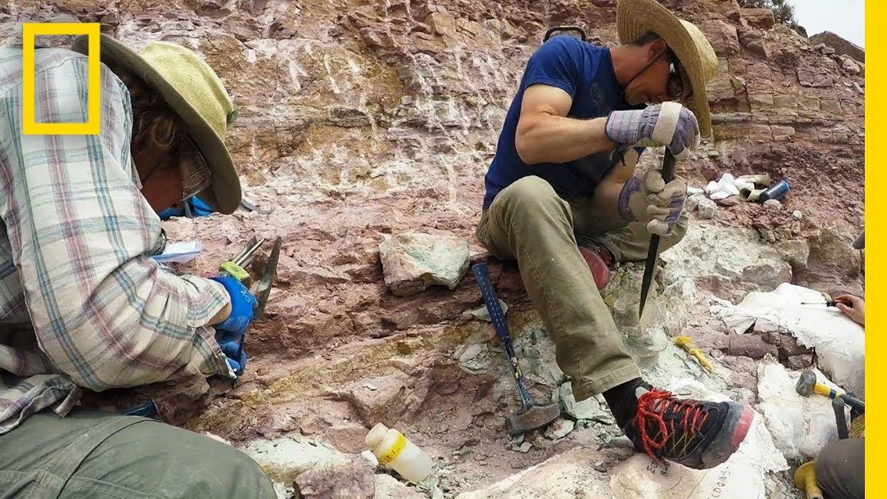 Dino Dig - Linked | Explorer