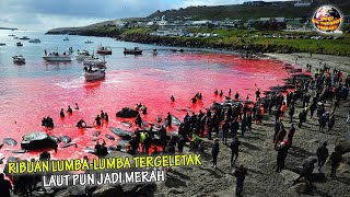 Download 1.500 Lumba-Lumba DIHABISl Tanpa Ampun, Laut Pun Seketika MERAH DAR4H, Tak Punya HATI NURANI!