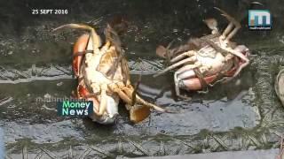 Crab cultivation Kerala