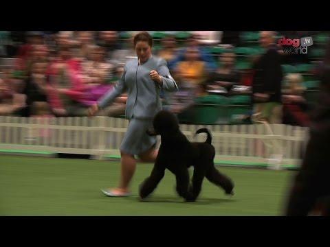 UK Junior Handling Association Final 2016 - Discover Dogs