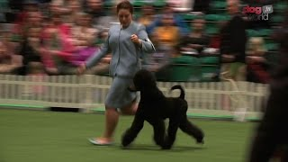 UK Junior Handling Association Final 2016 - Discover Dogs