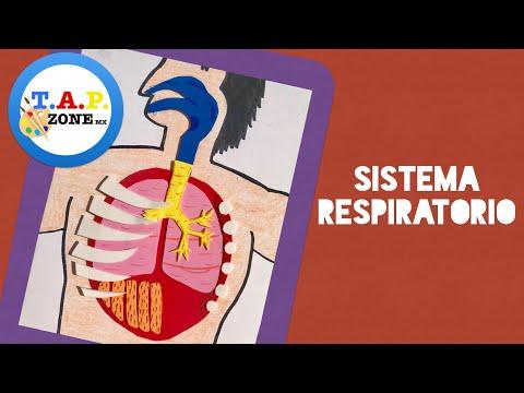 Como hacer la maqueta del sistema respiratorio (FACIL Y ECONOMICA) - TAP ZONE MX