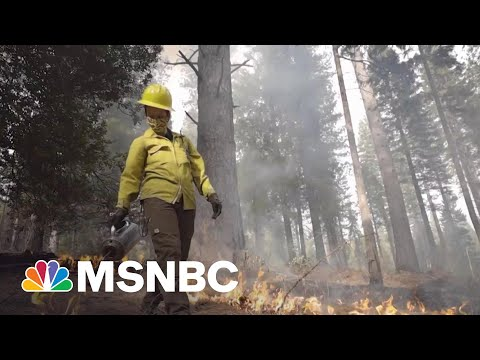 California Scientists Are Fighting Fire With Fire | Craig Melvin | MSNBC