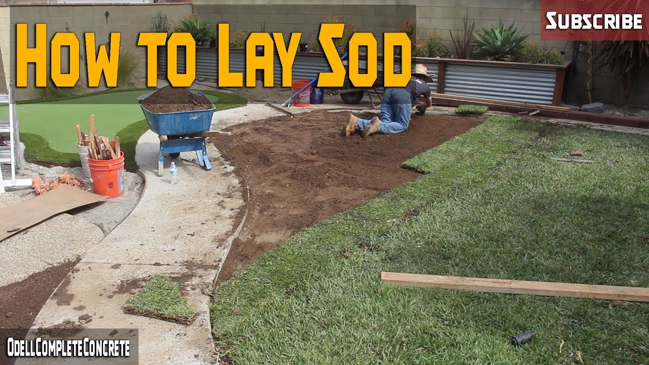 How to Lay SOD, St.Augustine Grass DIY for Beginners PART 3