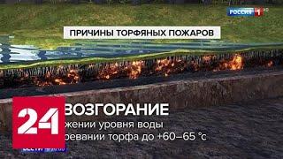 Из-за аномально малого количества снега велик риск раннего старта лесных пожаров - Россия 24