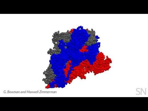 How A Coronavirus Protein Shape-shifts | Science News