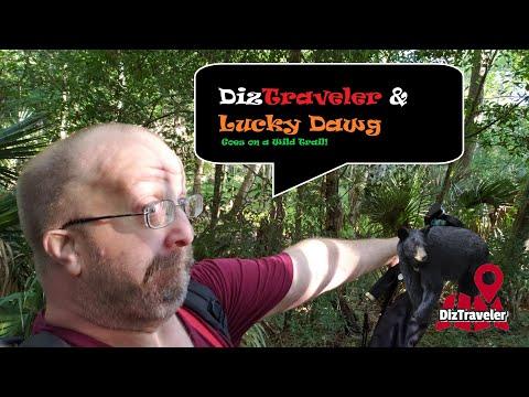 DizTraveler And Lucky Dawg Explores The Black Bear Wilderness Area