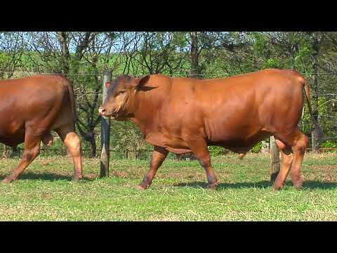 LOTE 35   ZT  2226, 1714