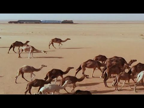 Watch: Desert train of Mauritania running again after 10 years