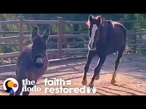 Rescued Wild Horse Loves To Play With A Little Donkey | The Dodo Faith = Restored