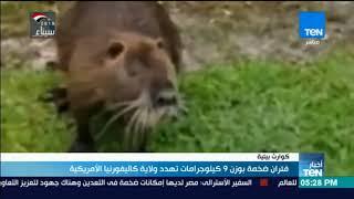 فئران ضخمة بوزن 9 كيلوجرامات تهدد ولاية كاليفورنيا الأمريكية