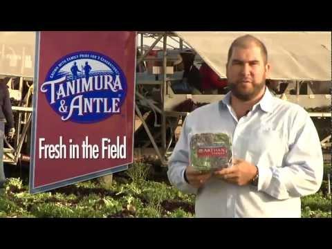 Fresh in the Field - Artisan Lettuce Harvest