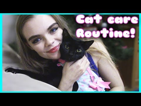 MY DAILY CAT CARE ROUTINE! (Yup! I have five kitties!)