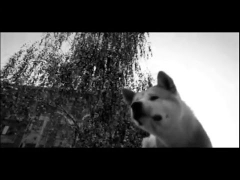 Hachiko your best friend!! [Tribute] - YouTube