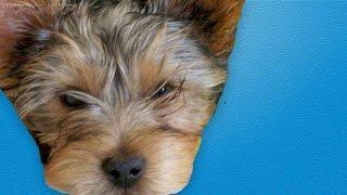 Судороги у собак | Виды | Причины | Лечение.