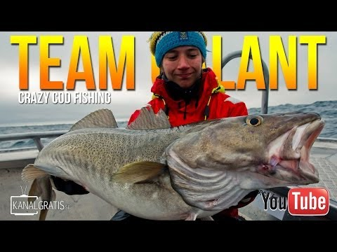 Crazy Cod Fishing in Norway | Team Galant (English Subtitles)