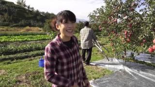 在蘋果王國向您請安來自台灣的採訪者,到青森體驗了富士蘋果的採收過程...