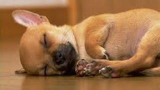 Musica Relajante Para Perros Inquietos - Musica Relajante Para Tu Mejor Amigo