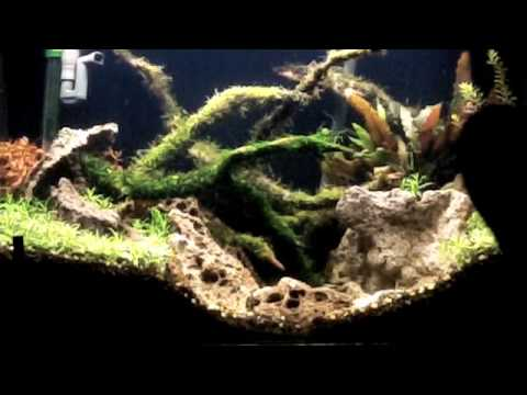 Tying Java Moss And Riccia To Manzantia Wood In A Planted Fish Tank Youtube