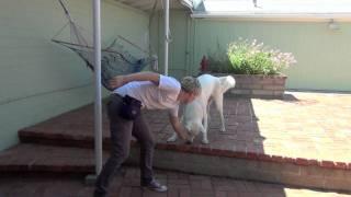 "Teach ""wait""- Clicker Dog Training"