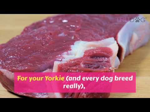 What to feed your Yorkie?