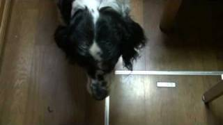 Hello.I am LOLLI. I am seven-years-old dog. I insist on my rights e...