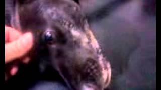 Попытка спасти отравленную собаку в запорожье
