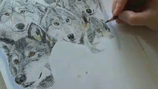 Speed drawing a Wolf pack - Time lapse