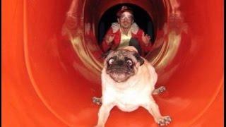 Собачья жизнь - собаки в неудобном пложении!