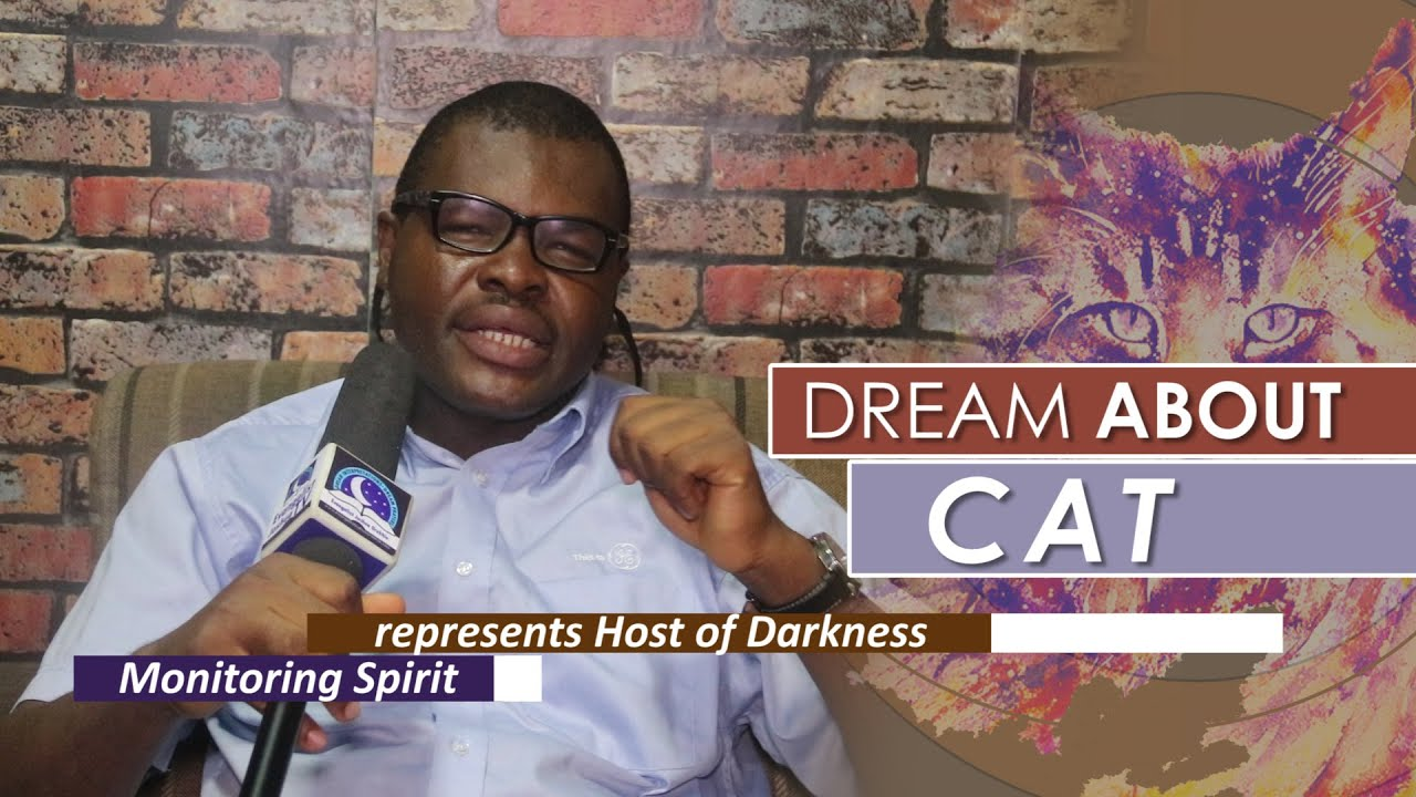 Download DREAM ABOUT CAT  - Find Out The Biblical Dream Meaning