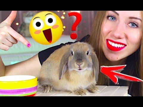 Как ухаживать за кроликом декоративным в квартире