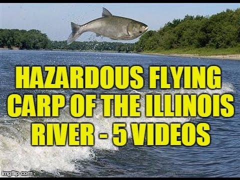 Hazardous Flying Asian Carp - Illinois River, Peoria - 5 Videos