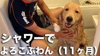 笑顔で洗われるゴールデンレトリバー「アムロ」