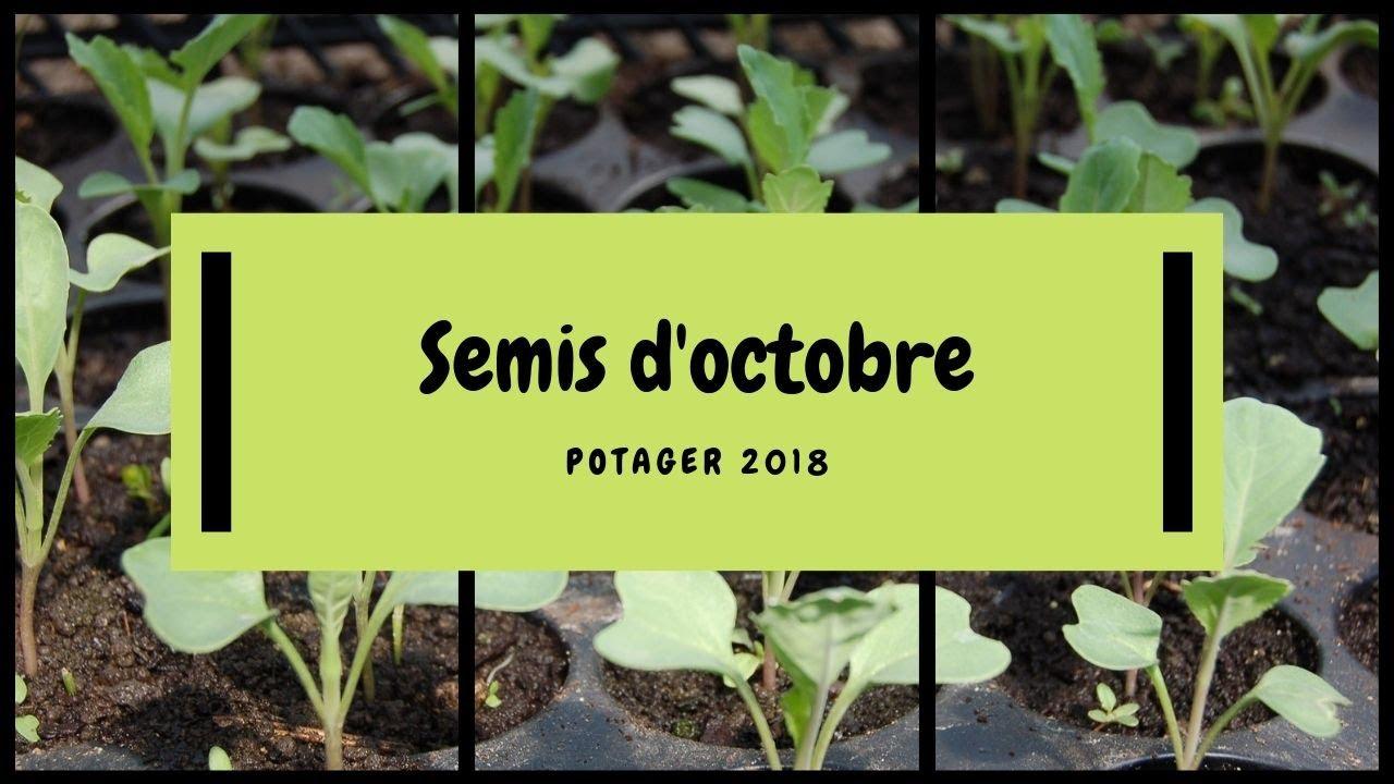 Quoi Planter En Octobre ? quelques idées de variétés à semer en octobre au potager