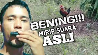 Download CARA MEMBUAT ALAT MEMANGGIL PIKAT AYAM HUTAN//SUARA BETINA AYAM HUTAN