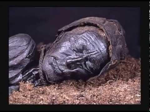 Alex Jones - The Order Of Death - illuminati rituals at bohemian grove