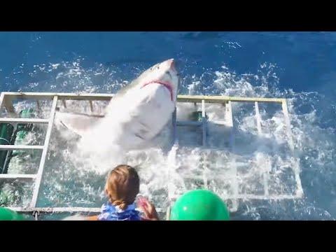 10 Shark Diving Gone Wrong