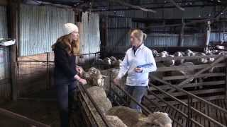 Australian Sheep Breeding Values Lynley Anderson  | Department of Agriculture and Food WA
