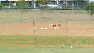 Beagles Lurecoursing - Run 2