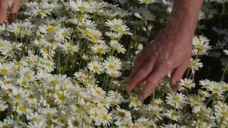 Bleu Line - B.L. Group | Pyrethrins & Pyrethrum: the natural insecticide